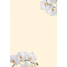 Motivpapper Sigel White Orchid DP904 A4 90gram, 50 ark/fp