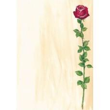 Motivpapper Sigel Rose Bloom DP695 A4 90gram, 25 ark/fp